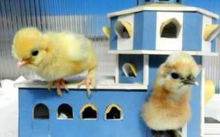 Изготовление цыплятника своими руками